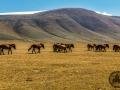 mongolia_tsambagaraw_konie