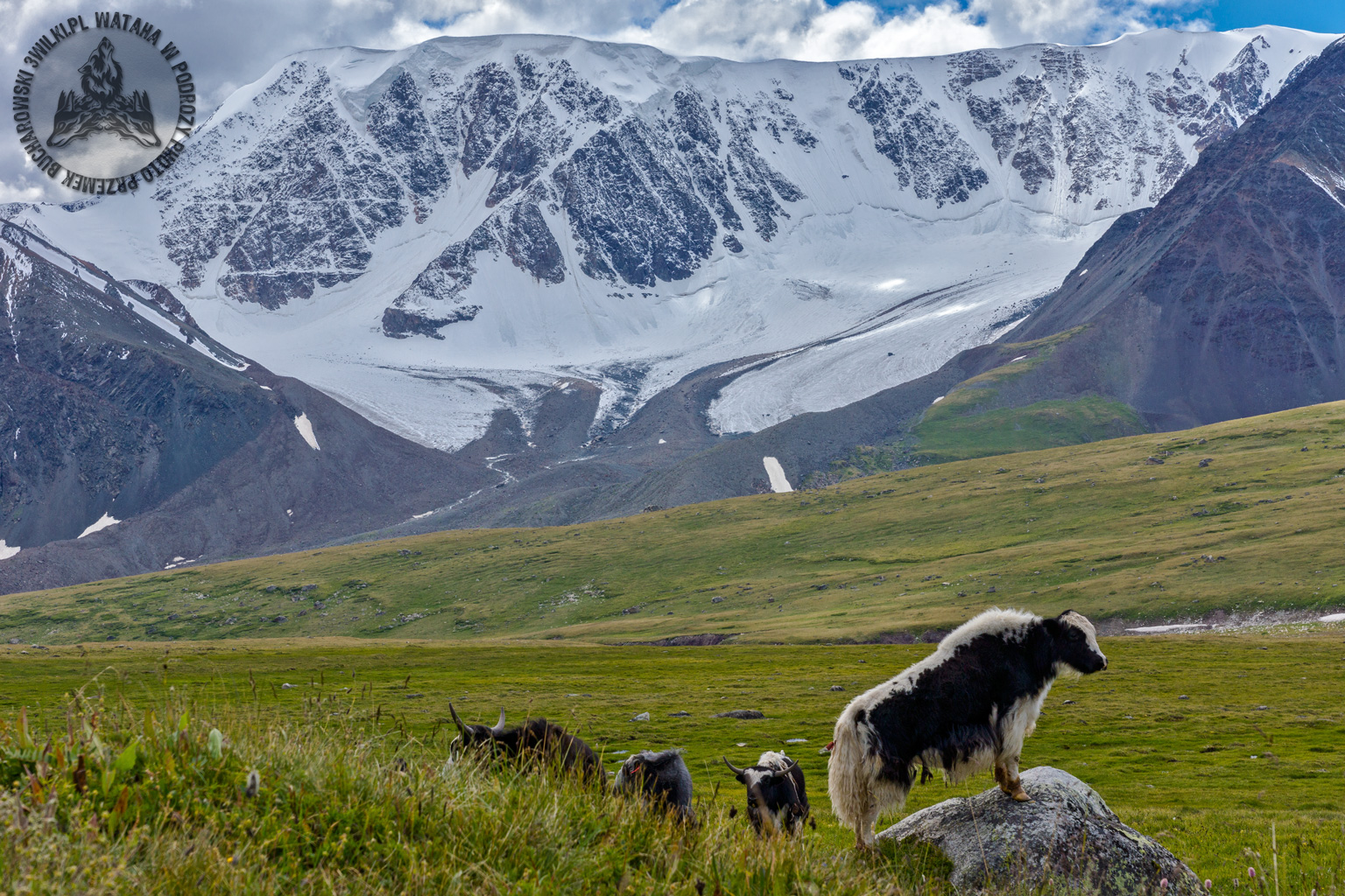 mongolia_tavanbogd_trekking_jak