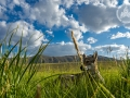mongolia_tavanbogd_trekking_diuna_trawa