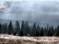 beskid_las_trekking6