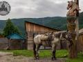 rosja_altaj_parking_dla_konia.jpg