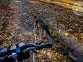 diuna_rower_swidnica