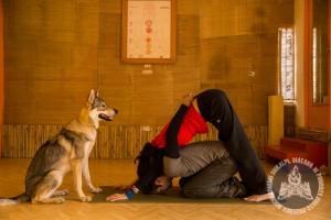 Diuna uczy Zubina yogi