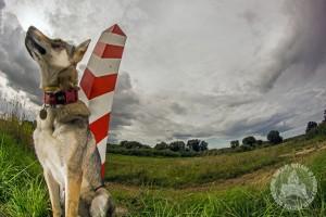 diuna_pozna_patrol_granicy