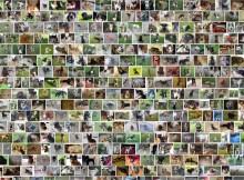 Ponad 450 000 stron wyświetla się w wyszukiwarce google po wpisaniu frazy 'oddam psa'