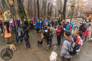 40 osób wysłuchało naszej prezentacji w Sobótce po zawodach Dog Orient.