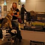 Pies jest, czas na odbiór bagażu