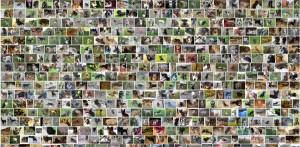 Ponad 450 000 stron wyświetla się w wyszukiwarce po wpisaniu frazy 'oddam psa' (żródło: google.com)